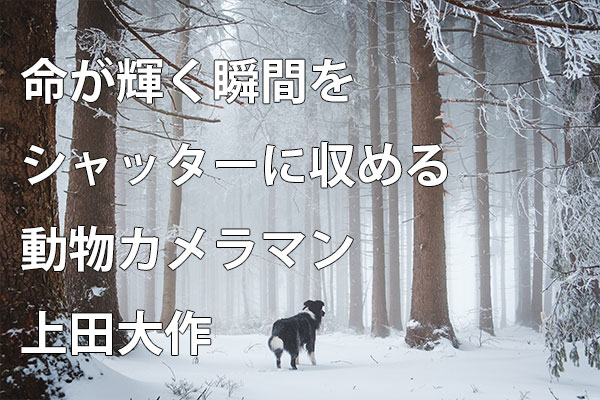 大作 上田